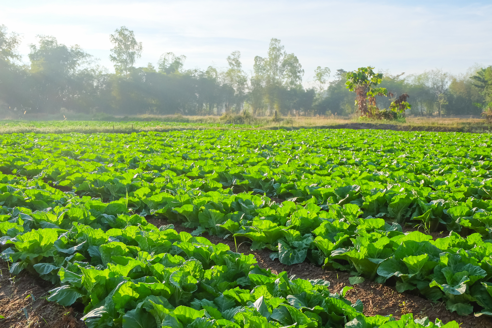 sustainable relationships with local farmers